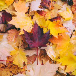 Mein November im Schnelldurchlauf